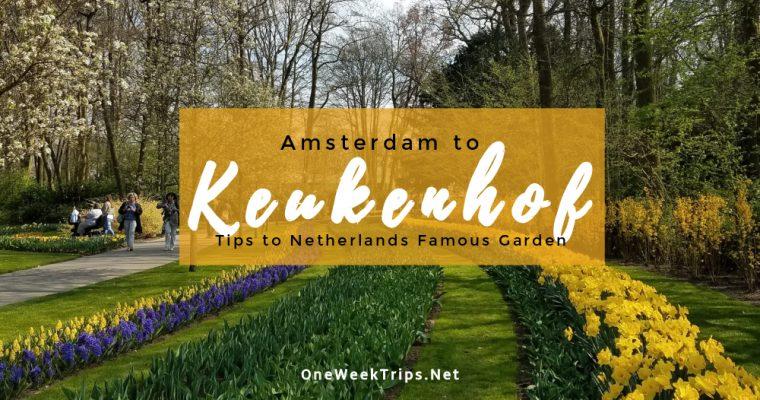 Amsterdam to Keukenhof: Tips to Netherlands' Famous Tulip Garden